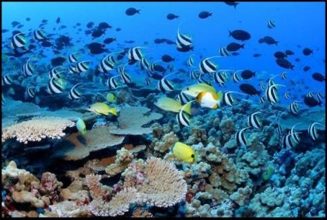 hawaii-coral-reef-600x404.jpg