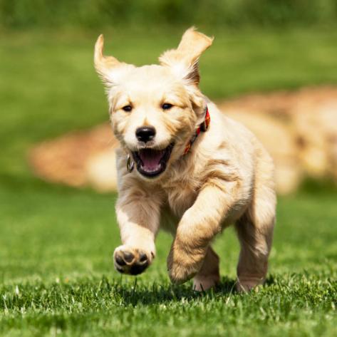 too-cute-doggone-it-video-playlist.jpg